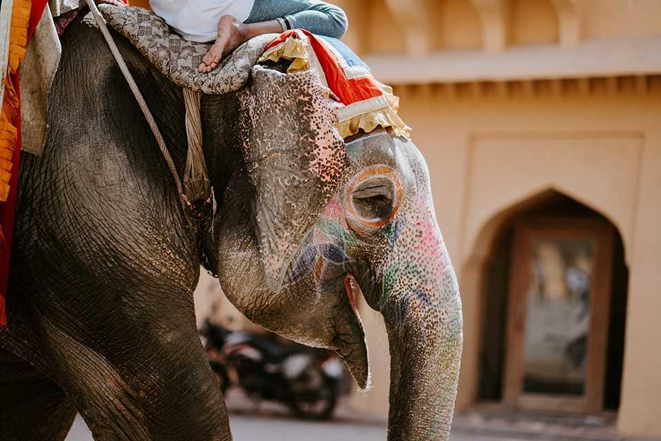 viaggio spirituale in india 2